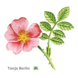 Class 21 A - wild-rose-tanja-berlin6