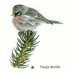 Class 21 B - red-poll-tanja-berlin1